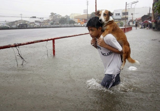 #5. A boy in Manila, Philippines carried his beloved dog through a flood caused by a monsoon. - 24 Happy Animal Photos Made Possible By The People Who Saved Them.
