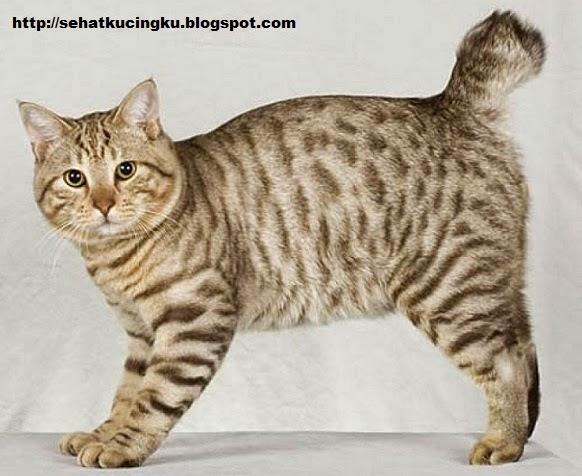 jenis-jenis kucing peliharaan, kucing peliharaan terbaik, kucing peliharaan populer, kucing terbaik untuk dipelihara