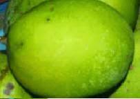 Buah Kweni (mangifera odorata)