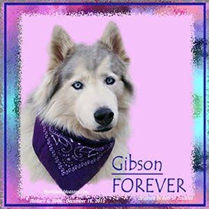 #LiveGibStrong Forever