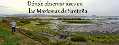 Dónde observar aves en las Marismas de Santoña