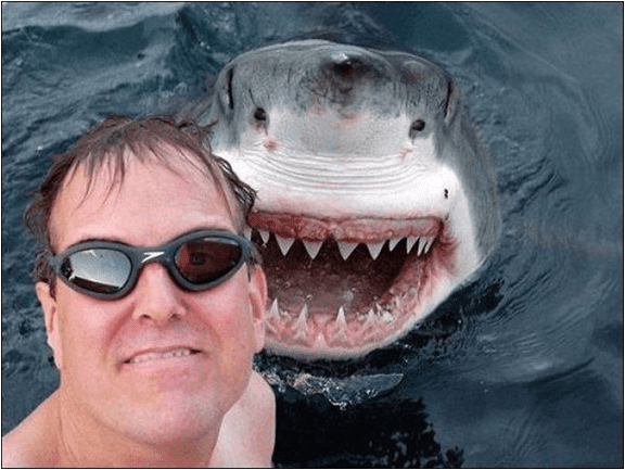 köpek balığı ile selfie