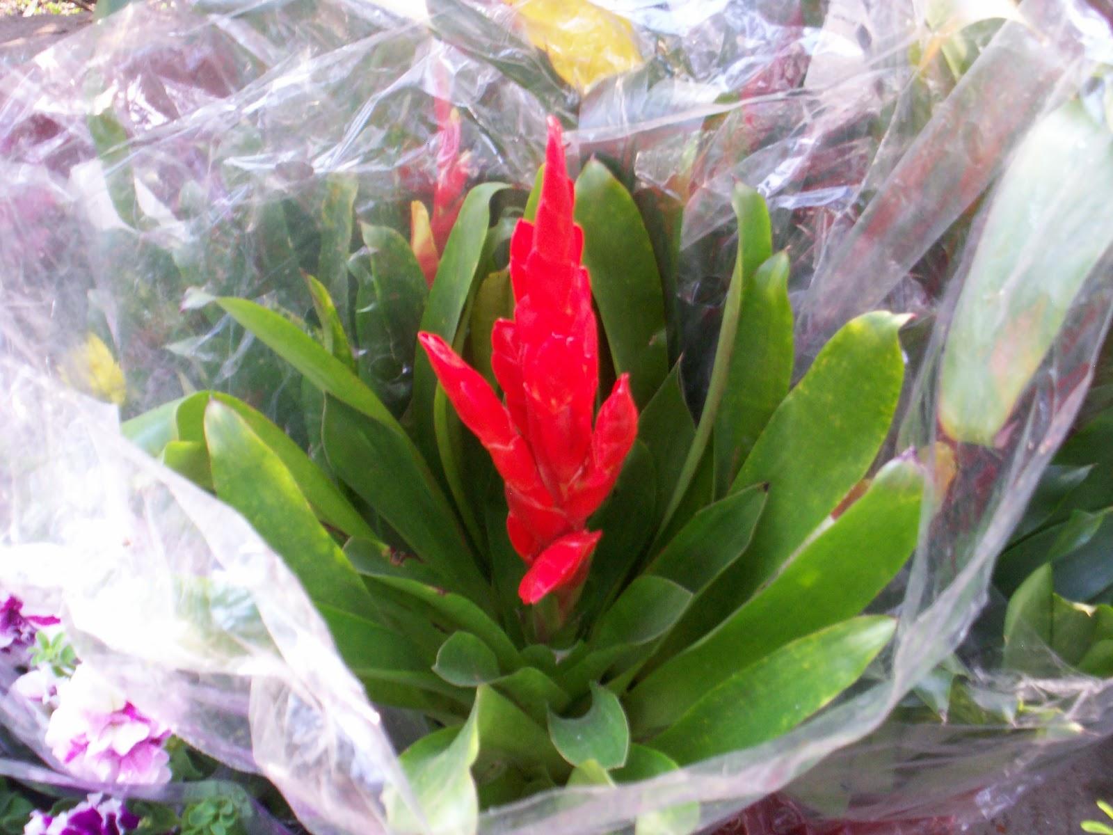 Fondo Con Flores De Ornato, Rosa Y Rojo Ilustraciones