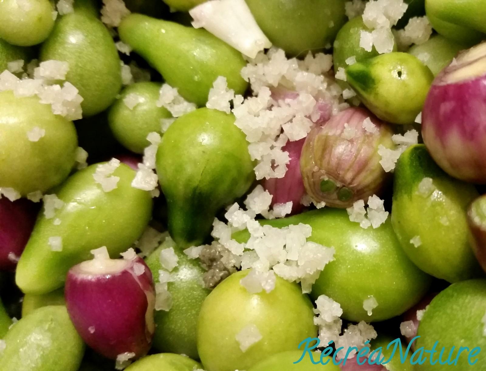 Tomates vertes du jardin comme des cornichons au romarin - Que faire avec des tomates du jardin ...