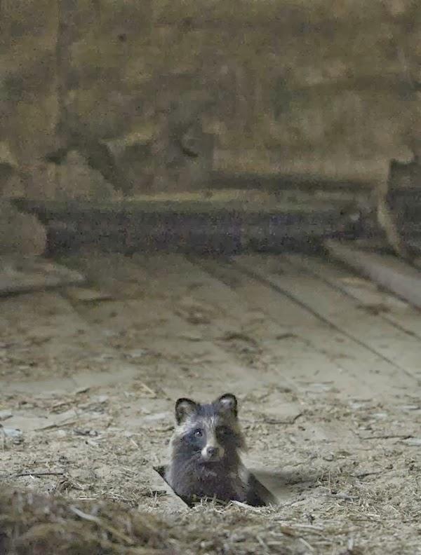 Khoảnh khắc ngộ nghĩnh của động vật