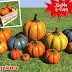 Mesh Pumpkins! Low Prim/Mod/Copy