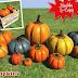 Mesh Pumpkins! Low Prim/Mod/Copy