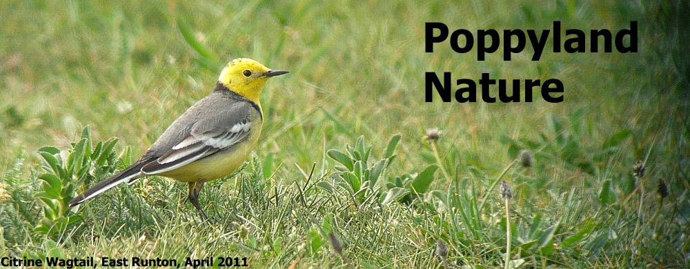 Poppyland Nature