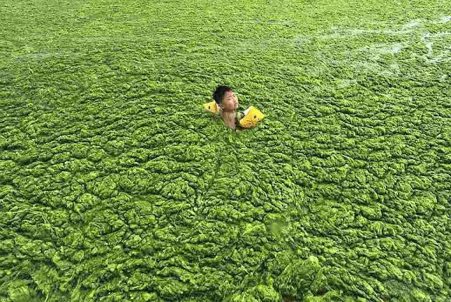 Poluição química provocou crescimento anômalo de algas nas praias de Qingdao