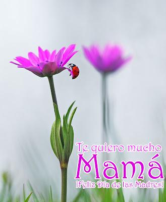 Te quiero mucho Mamá (Mensajes Día de las Madres)