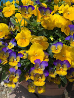 草加教会 野の花たより