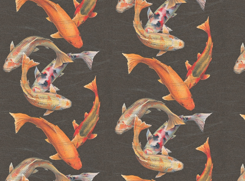 Dalliance design a love affair with design getting a for Koi fish wallpaper