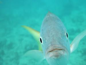 Underwater Troublemaker