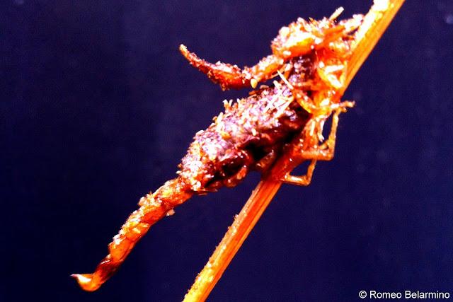 Fried Scorpion at Wangfujing Snack Street