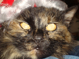 Devil Cat, Angry Cat, Christmas Cat