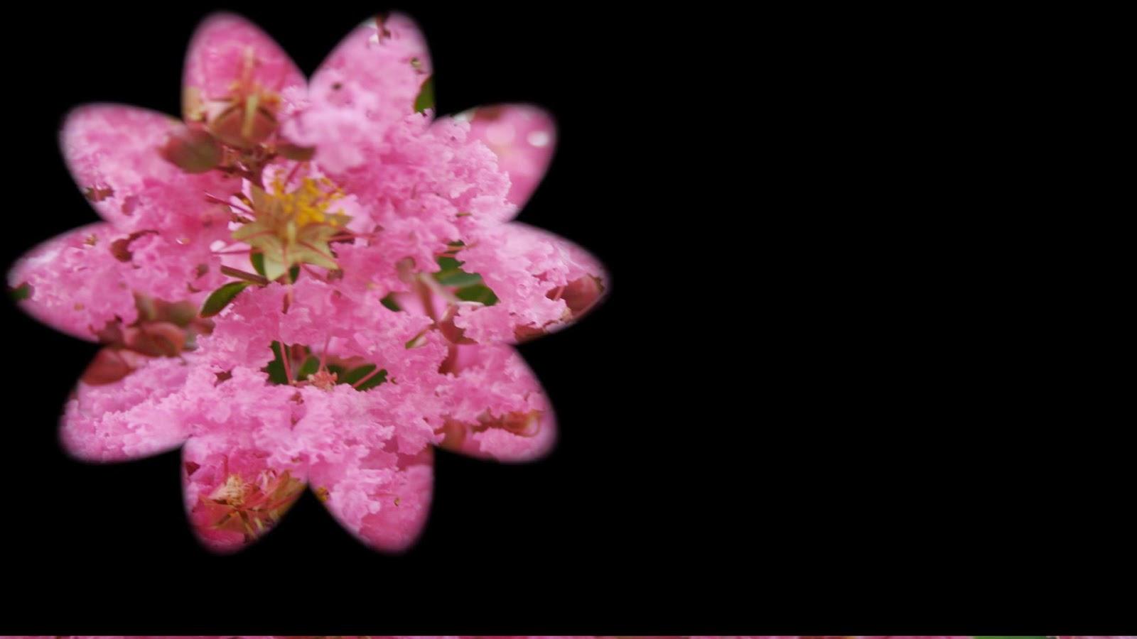 Flores 1920x1080
