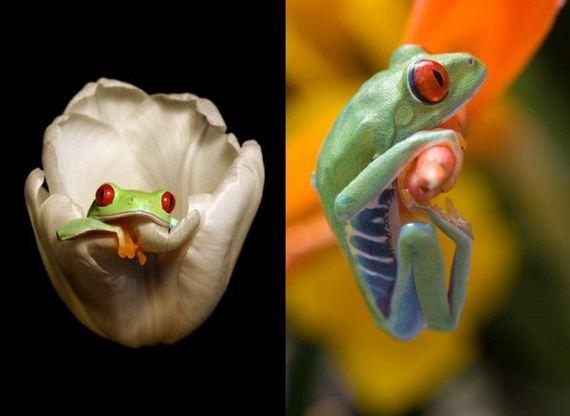 Πολύχρωμοι βάτραχοι
