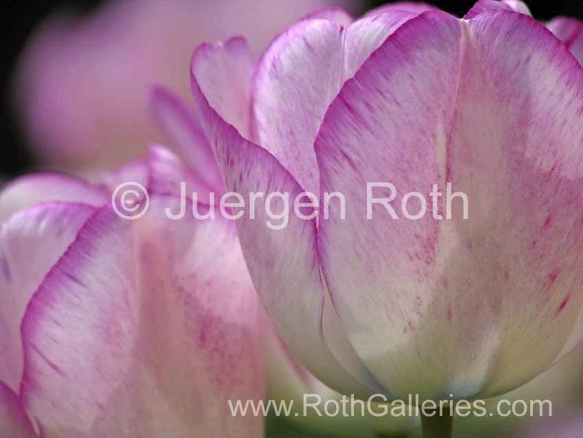 http://juergen-roth.artistwebsites.com/