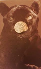 La pantera è solo una  gatta nera
