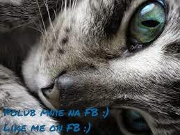 Polub mnie na FB/Like me on FB :)
