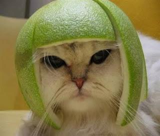 http://2.bp.blogspot.com/-vk0B3Rzq1dA/TbgUIo5xfSI/AAAAAAAAAaQ/opONwYt-V80/s1600/cat.jpg