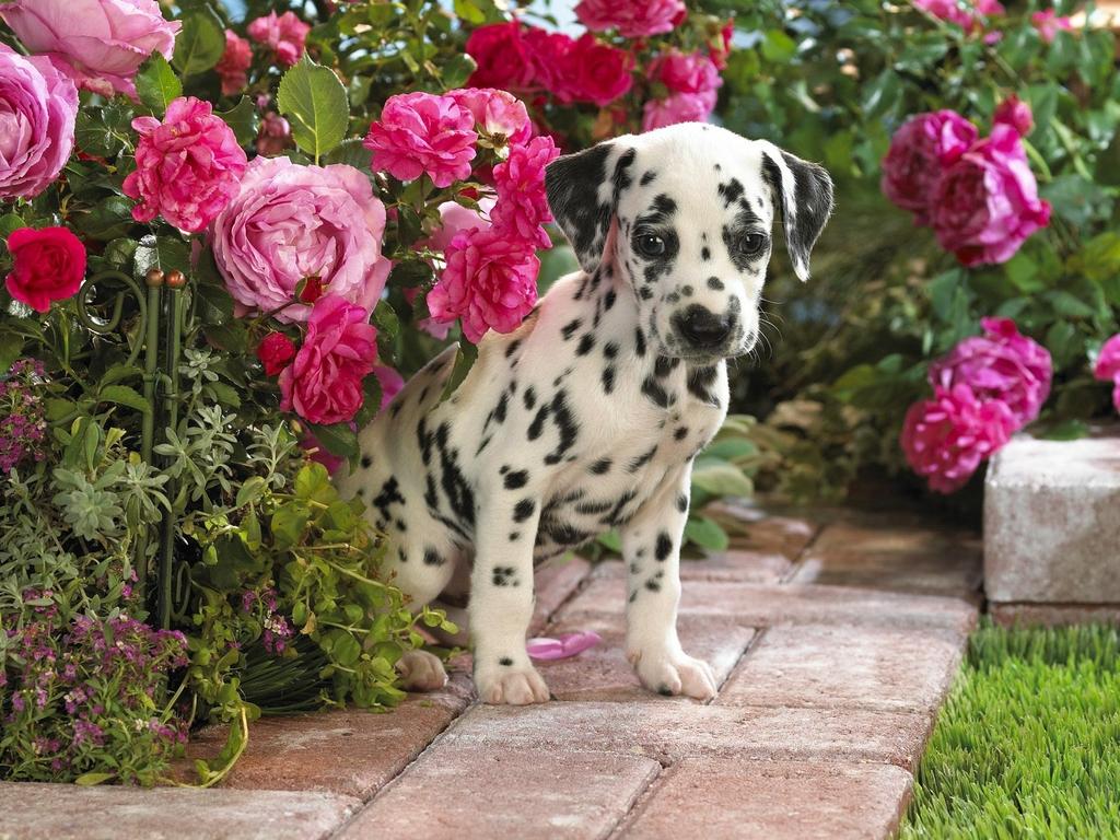 Kitten Puppy Wallpaper | Beautiful Flowers Wallpaper