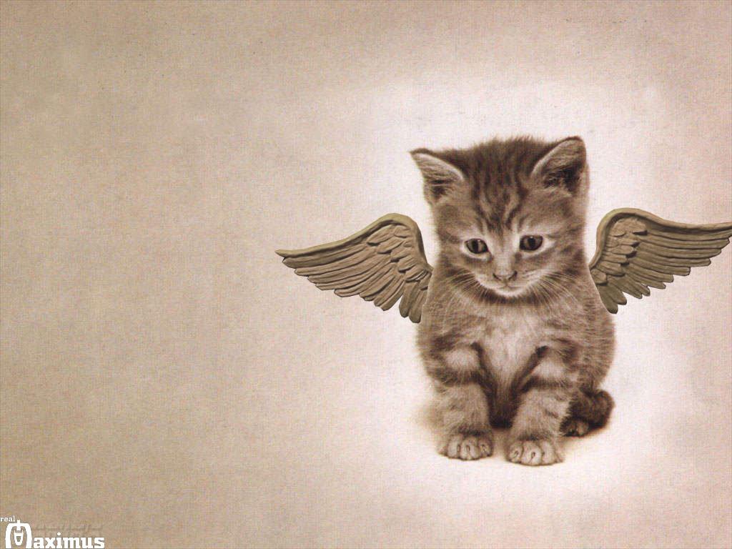 http://2.bp.blogspot.com/-vkam7RRS-i4/T8cGH5DHRTI/AAAAAAAAA0g/ussrzLbJNmM/s1600/Cat-Wallpaper-cats-636603_1024_768.jpg