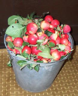15.08. Собрал яблочки ГОРНОАЛТАЙСКОЙ. Удивительно! После сильнейшего зимнего морозобоя - она еще и плодоносит! Пусть немного, но все-таки...