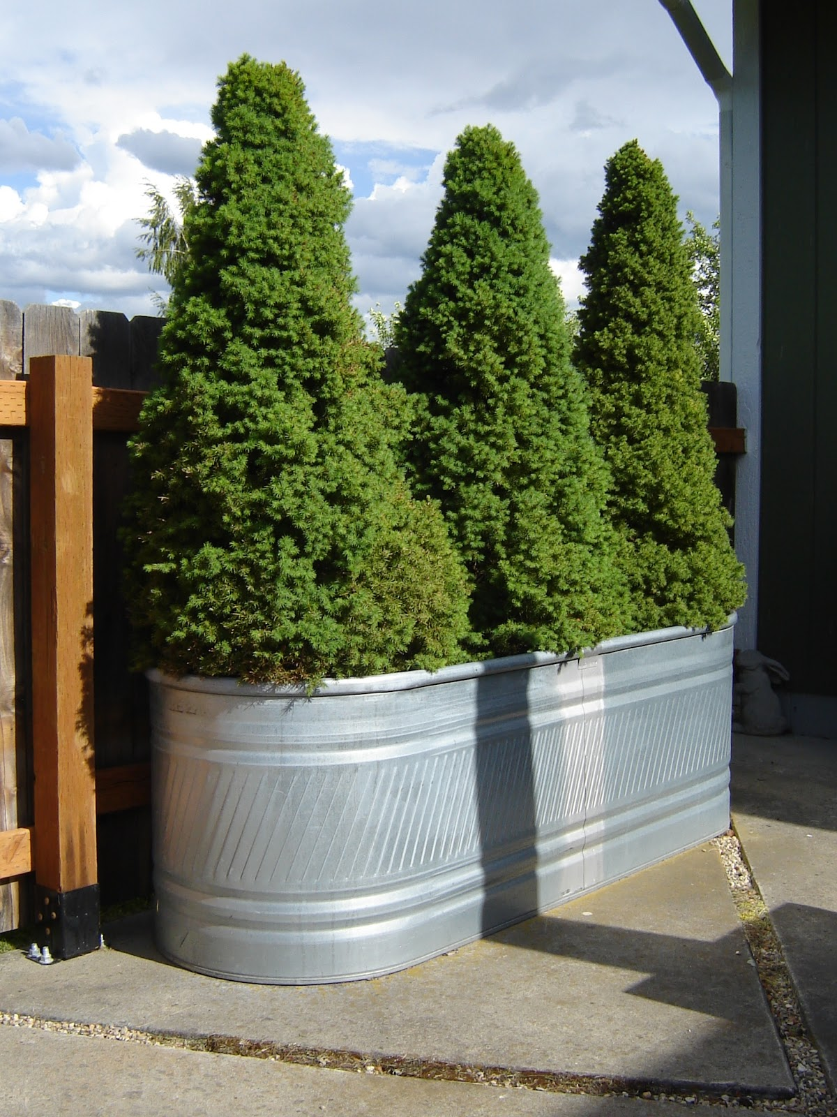 Spruce Feed Trough Planters