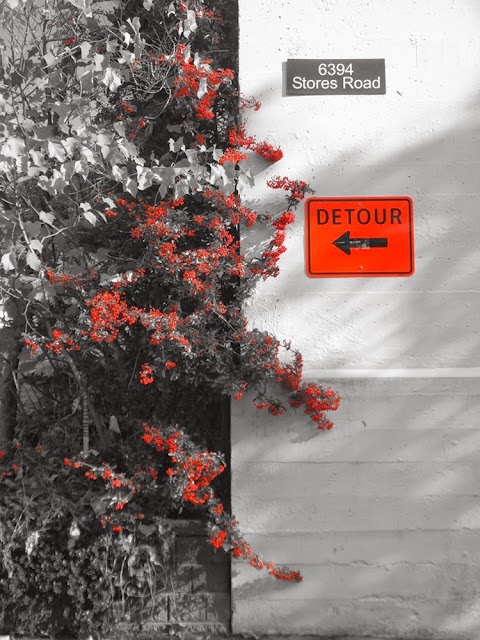 UBC Campus, Vancouver, Red Berries, Orange Detour Sign