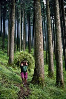 Darjeeling (Best Honeymoon Destinations In India) 2