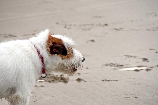"""Ich will wieder an die Nordsee... - """"Fee ist mein Name"""""""