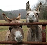 "<a href=""http://www.farmgirlfare.com/p/daily-donkey.html""><b>THE DAILY DONKEY!</b></a>"