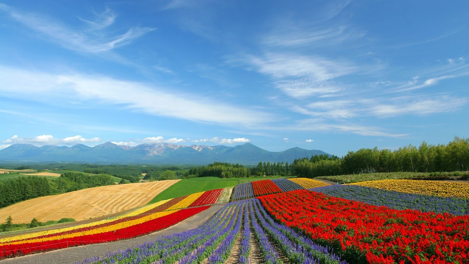<b>Field</b>, wallpapers, <b>hokkaido</b>, <b>country</b>, <b>japan</b>, nature, fenjin, wuxga ...