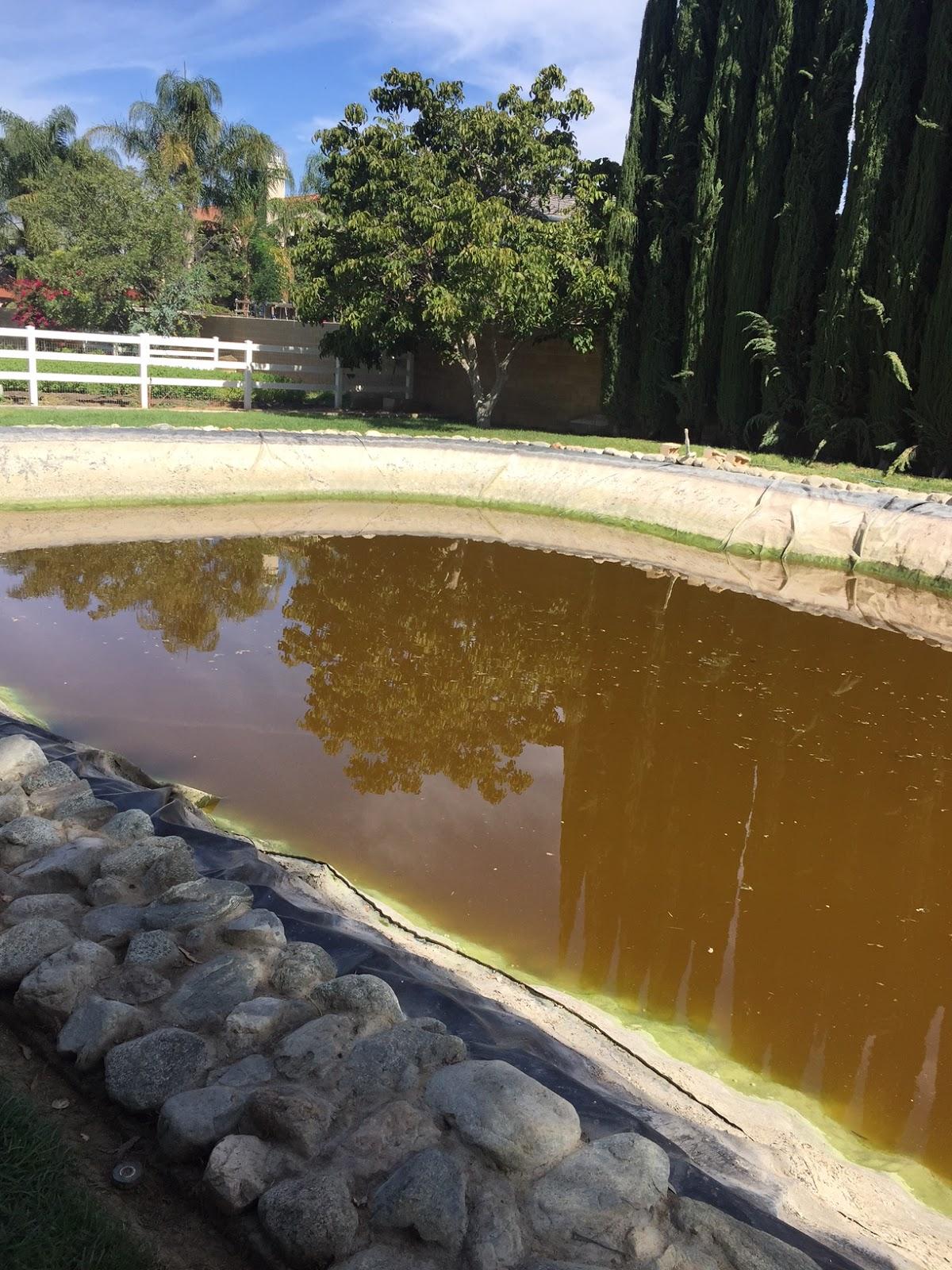 Catfish Pond   A Farmboy Stuck In The City Fox Farm Riverside Ca Draining The