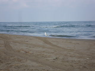 Playa El Serrallo Beach Seagull - Tarragona - Spain