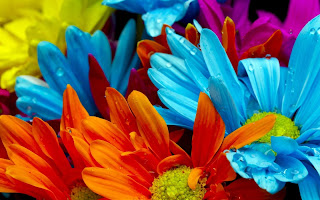 Rainbow Color Flowers HD Wallpaper