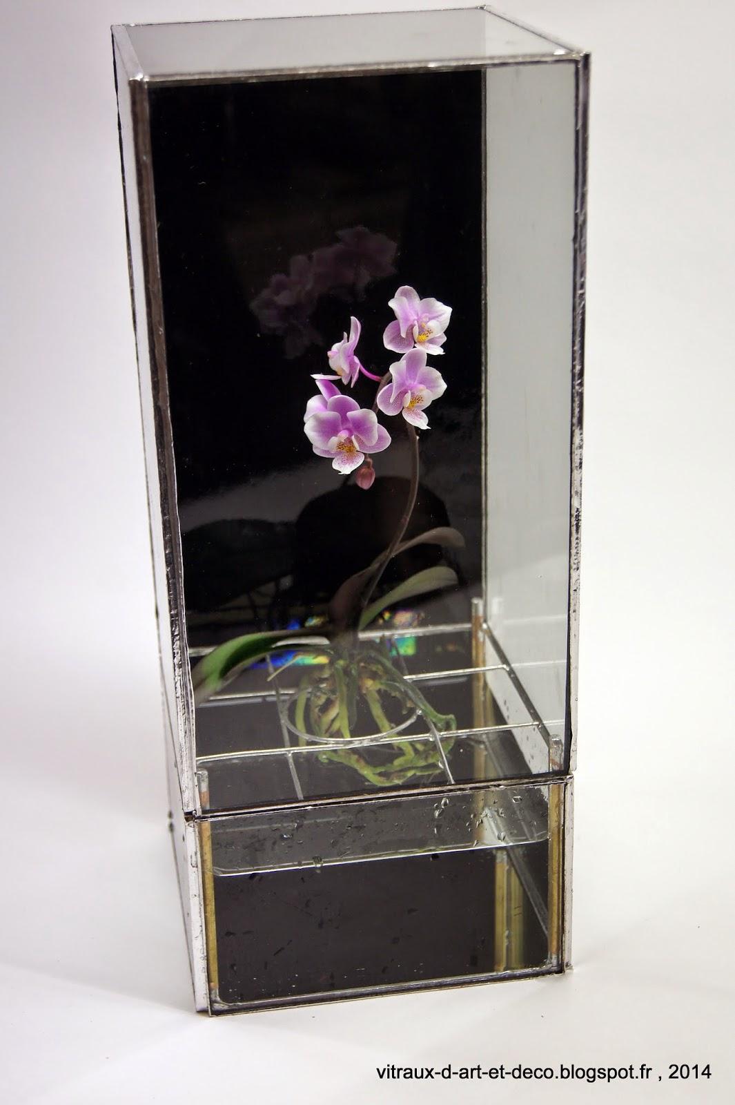 question plante aquatique ou semi aquatique. Black Bedroom Furniture Sets. Home Design Ideas
