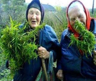 smesna slika, babe mirišu travu