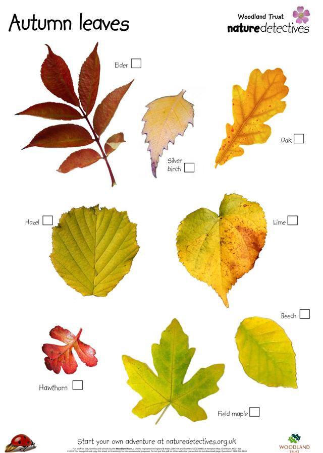 20+id_autumn_leaves.jpg