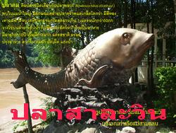 ปลาแม่น้ำสาละวิน salween fish