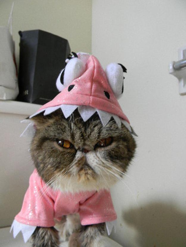 http://2.bp.blogspot.com/-vnsAacpKZSk/UVu1fNNpdZI/AAAAAAAAHD8/oyS1jZPD6kI/s1600/funny-cat-24.jpg