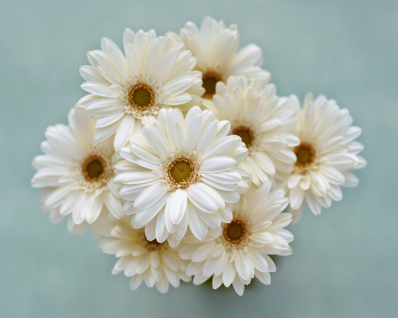 Love Images, White Flowers part 2