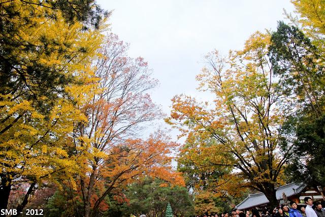 Nami Island autumn