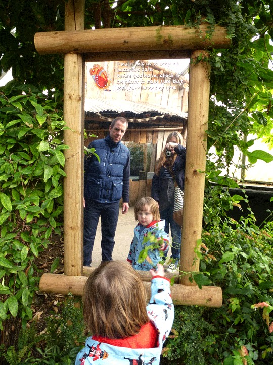 checking the mirror in the butterfly house