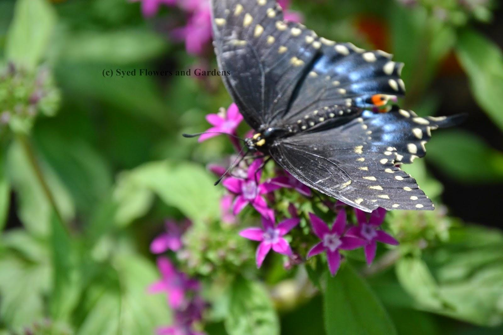 butterflies on flowers flower and garden