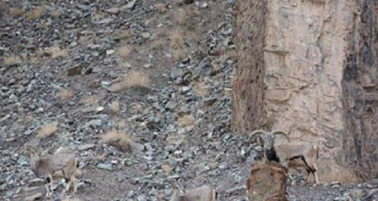 هل انت ذكي وقوي الملاحظة لكي تكتشف مكان الفهد في الصورة