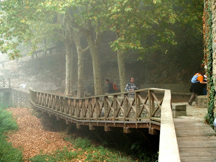 El Parc de la Font Gran des de l'antic casal del gremi de paraires