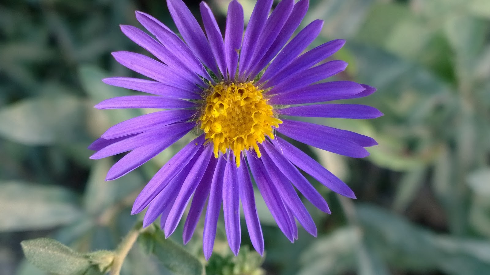 south jersey native plants  first annual open house fall native plant sale