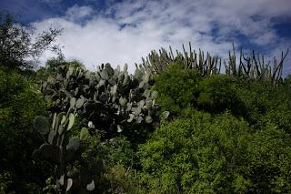 dfhoto fotos de Yagul en Oaxaka México Viajes y Turismo Cactus y paletonas publica tus fotos en el blog
